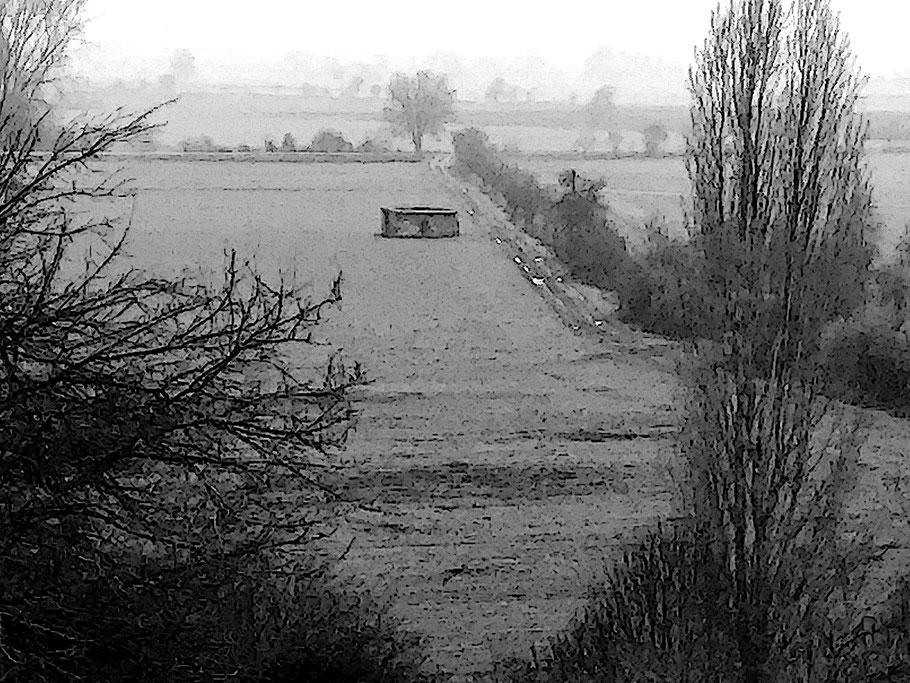 Nebel im Pfungstädter Moor
