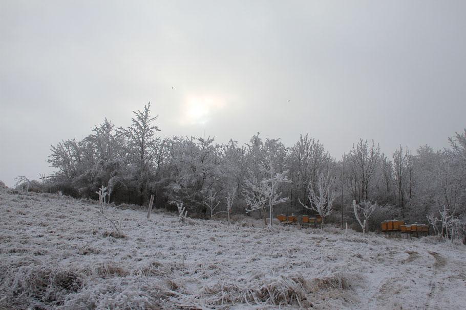 Die Bienen sind mittlerweile in der wohlverdienten Winterruhe, alle notwendigen Tätigkeiten sind erledigt. Hoffen wir, dass sie gut durch den Winter kommen, damit sie im nächsten Jahr wieder viele Blüten bestäuben und leckeren Honig produzieren können.