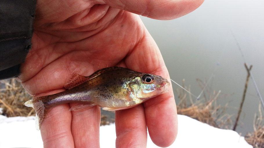 Ерш - первая рыба нового сезона:-)