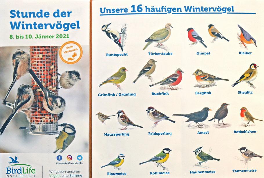 """Drei Seiten aus der Broschüre """"Stunde der Wintervögel"""" von """"BirdLife Österreich"""", die von der Homepage """"www.birdlife.at"""" heruntergeladen werden kann."""