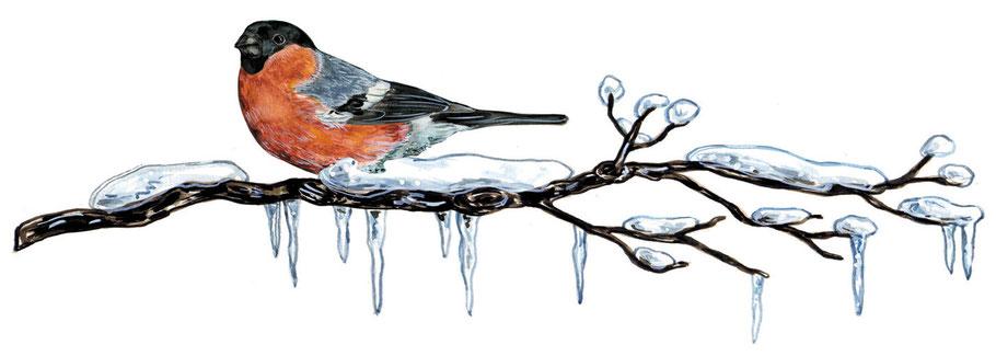 """Dompfaff auf verschneitem Zweig Illustration Caroline Ronnefeldt aus """"Hausbuch für den Advent"""" ars Edition 2014"""