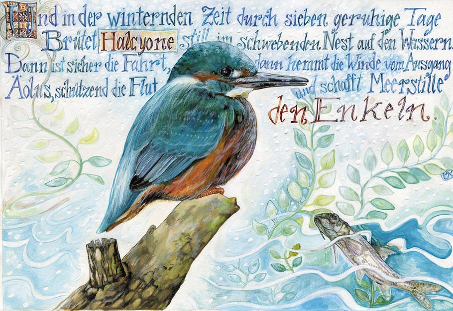 Eisvogel Aquarell zu den Metamorphosen des Ovid © Caroline Ronnefeldt