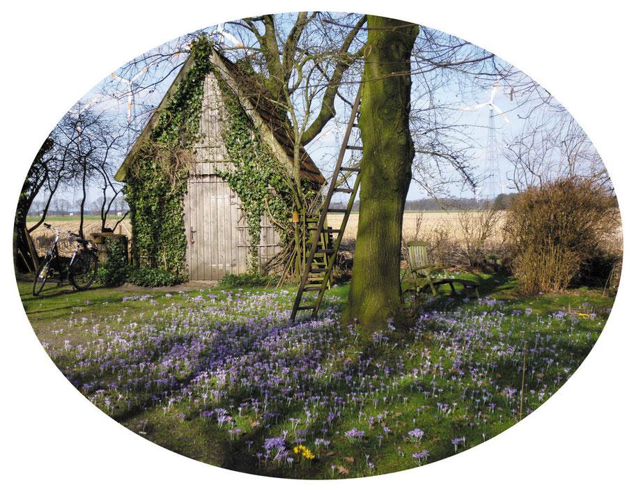 """Foto im Oval """"Krokusse vor dem Gartenschuppen unter der Linde"""" © Winfried Haas"""