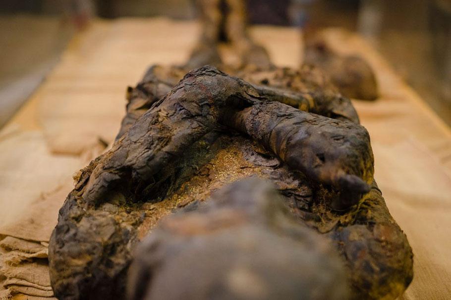 Le Mummie a Rovigo, La collezione Egizia più grande del Veneto