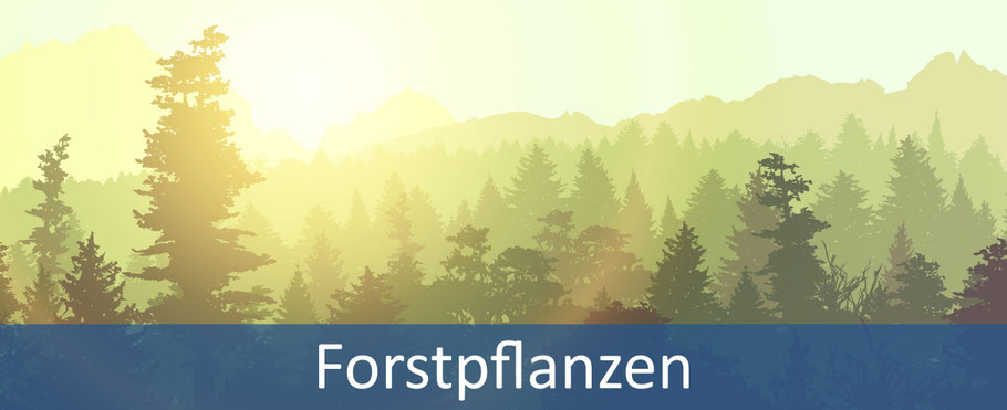 Forstpflanzen kaufen