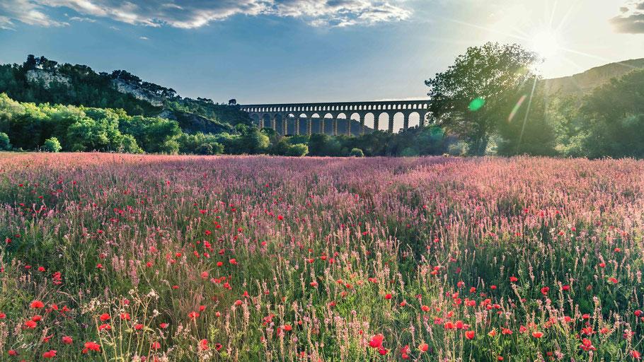 Photo de coquelicots au pied de l'aqueduc de roquefavour près d'Aix en provence