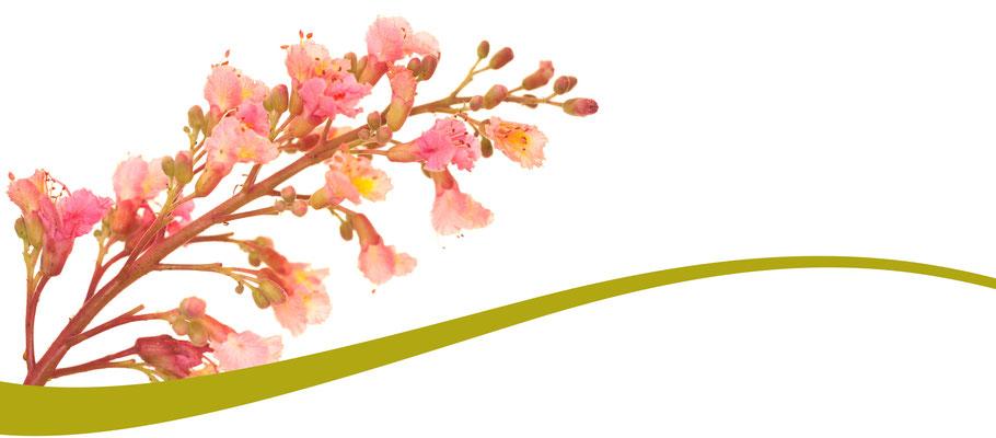 Bach Blüten Nr. 25 Red Chestnut Rote Kastanie