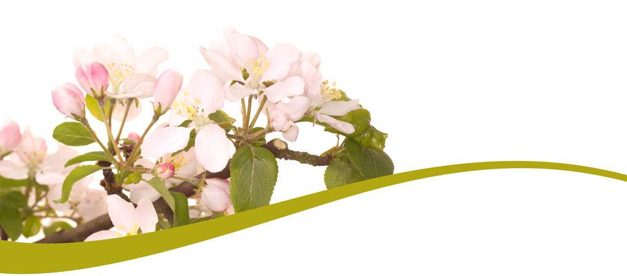Bach Blüten Nr. 10 Crab Apple Holzapfel