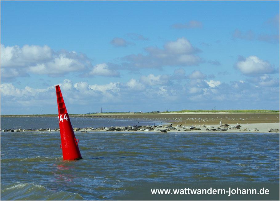 Während der Rückfahrt von Baltrum können wir Seehunde auf der Ostspitze von Norderney beobachten!