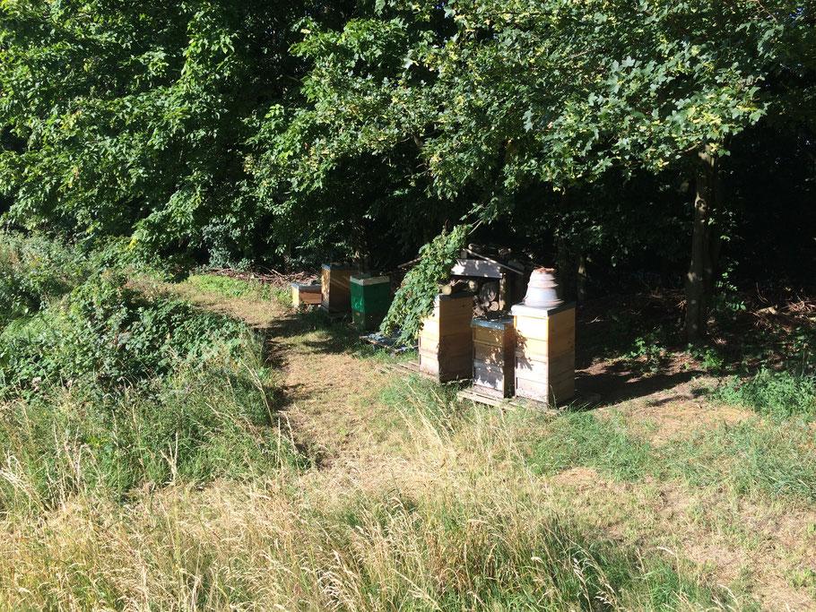 Spätsommerlicher Bienenstand - das Blütenmeer ist Vergangenheit.