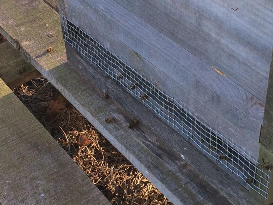 Zaghafte Aktivität am Bienenstock... Wenige tote Bienen liegen vor der Beute.