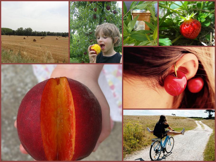 Des images souvenirs d'un bel été : champs de blé, fraise, pêche, ballade à vélo etc