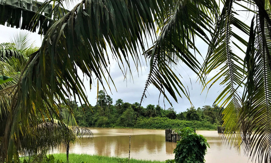 Commewijne river at Potribo in Surinam, one of the plantations where the Van Loon family invested in. (image Museum van Loon)