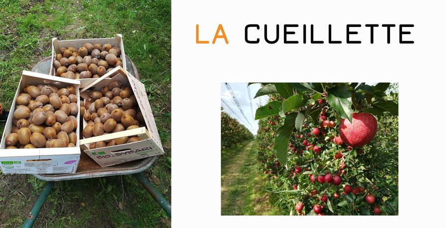 les fruits de vergers de Vendée