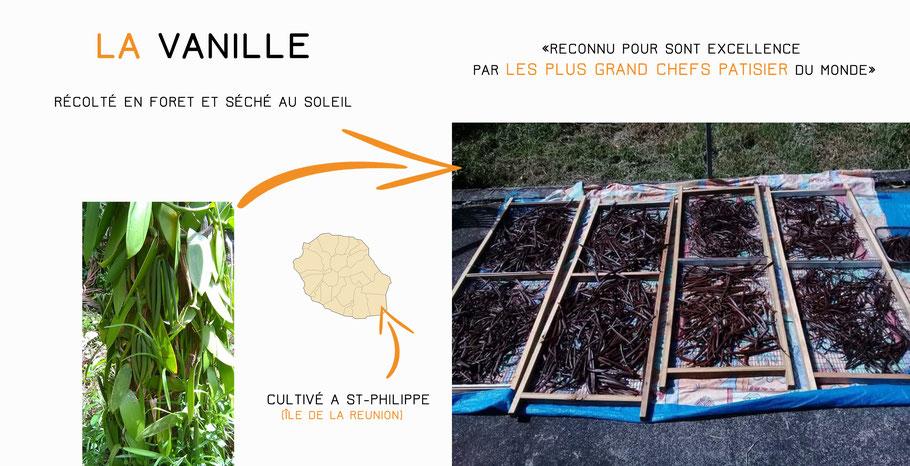 vanille bourbon Saint-Philippe