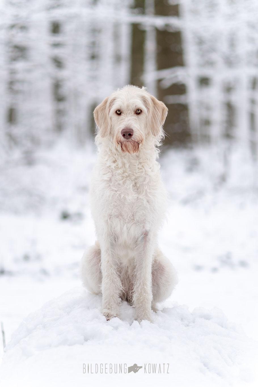Arya im Schnee