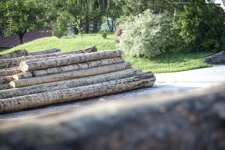 Rundholz für zukünftige Tannen Massivholzdielen