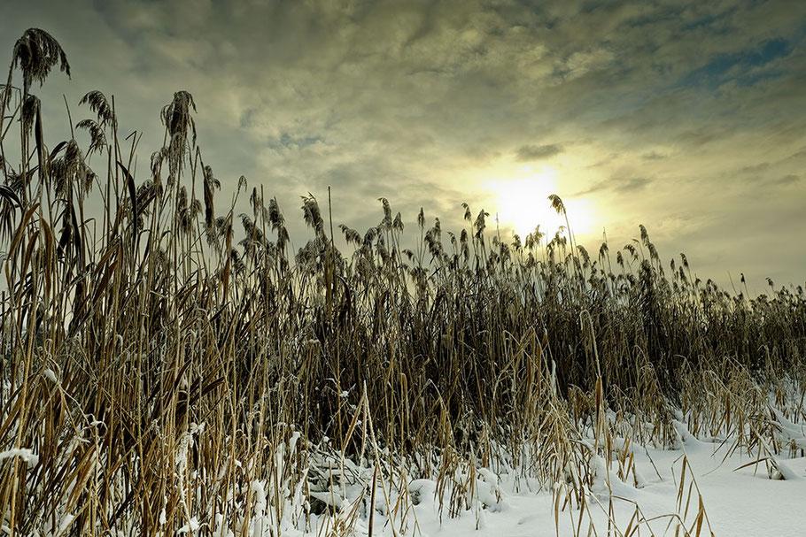 Winterstimmung am Weiher. Schilf, Schnee. Wolkenverhangener Himmel mit Sonnenspot.