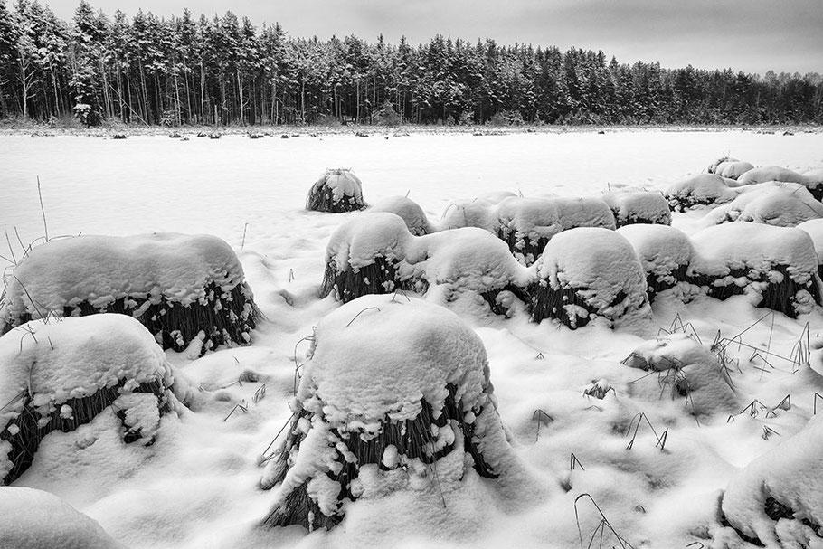 Weiher, im Vordergrund schneebedeckte Binsenstöcke. Hintergrund Waldrand mit grauen Himmel. Fine Art Foto, schwarz-weiss.