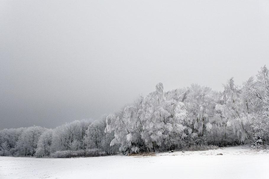 Waldrand mit Rauhreif. Landschaft am Grenzkamm Deutschland-Tschechien bei Bärnau.