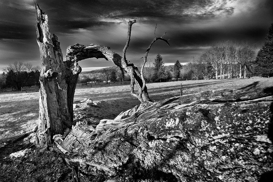 Landschaft mit zerbrochenen alten Baum auf einer Weide.