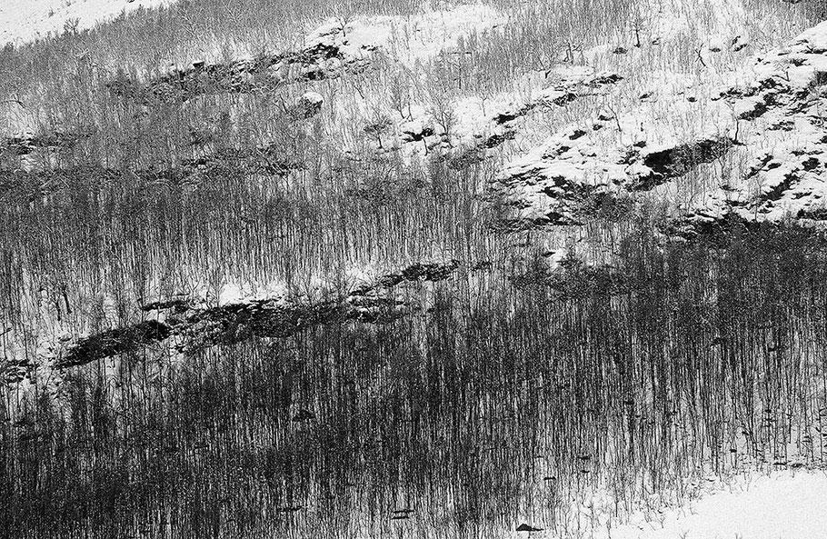 Winterlich verschneite Felsstrukturen in einen sehr grafisch wirkenden Birkenwäldchen.