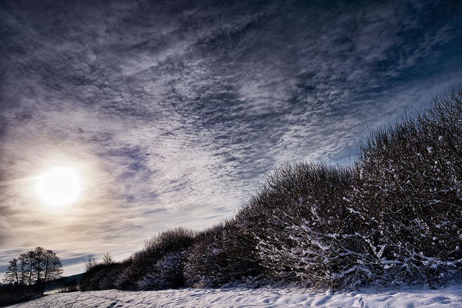 Winterlandschaft mit Schnee, im Vordergrund Feldgehölz, Hecke, Gegenlichtaufnahme, sehr schön strukturierter Himmel.