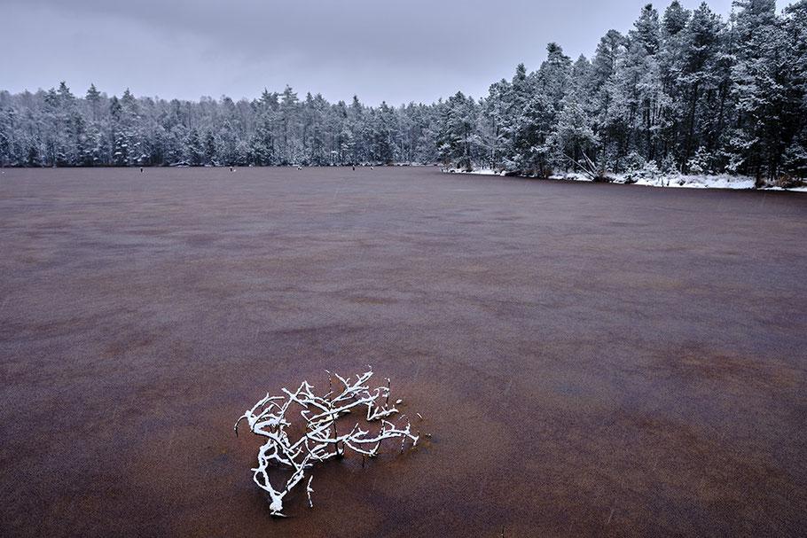 Gscheibte Loh, aufgelassener Torfstich. Eisfläche in Farbe Altrosa, im Vordergrund beschneites Geäst, Wald, Graublauer Himmel.