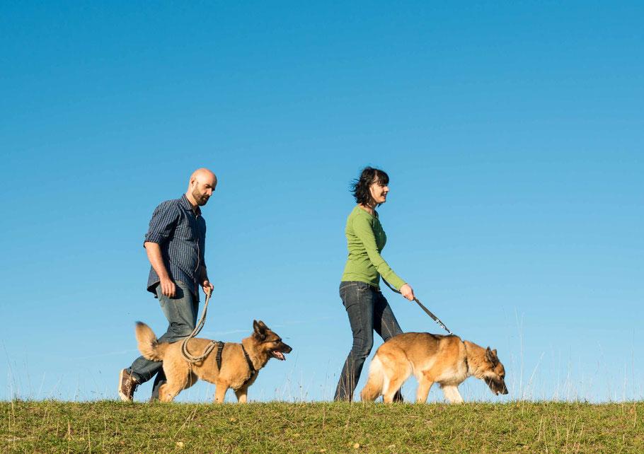 Tierbetreuung auf Zeit - eine Alternative, die nicht ganz auf ein Haustier verzichten wollen. Foto: Adobe Stock