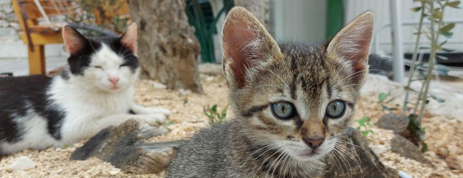 MAG Lifestyle Magazin Tierbilder Tierfotos Bilder Fotos Tiere Haustiere Wildtiere