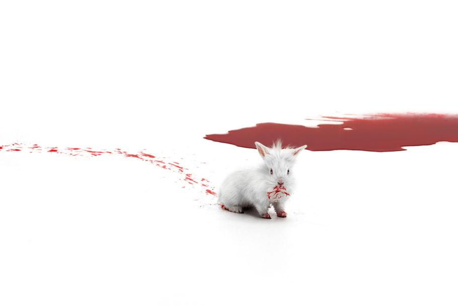Das Kaninchen in WEISS Blut und Shakespeare von Carolina Rath
