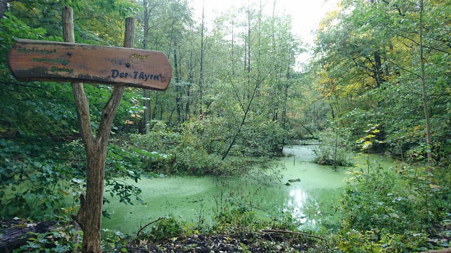 Biotop in Köpenick