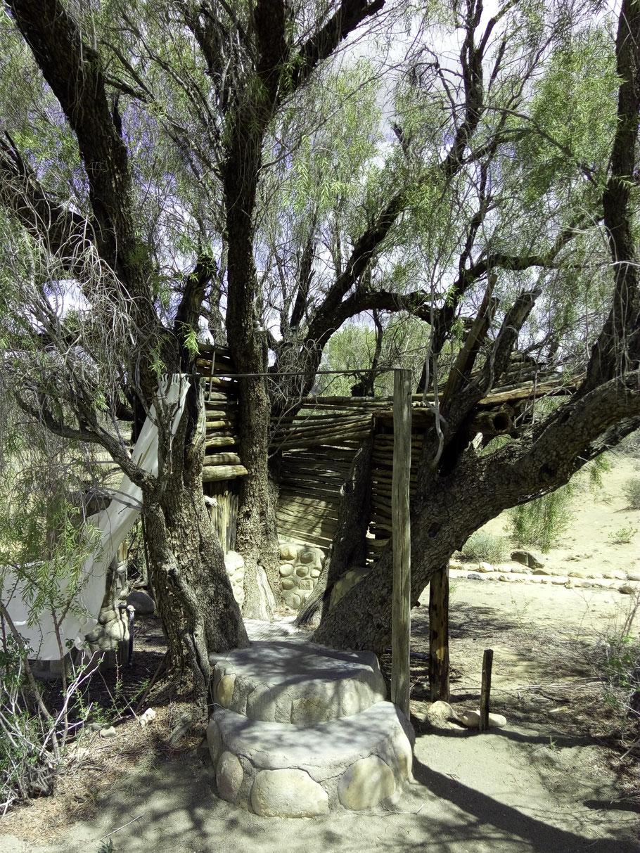 Ein Baum - wie gemacht für eine Dusche