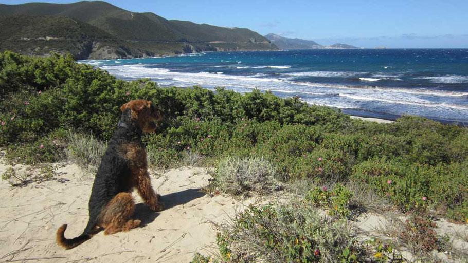 Bepo vom Juratal Korsika Mai 2017