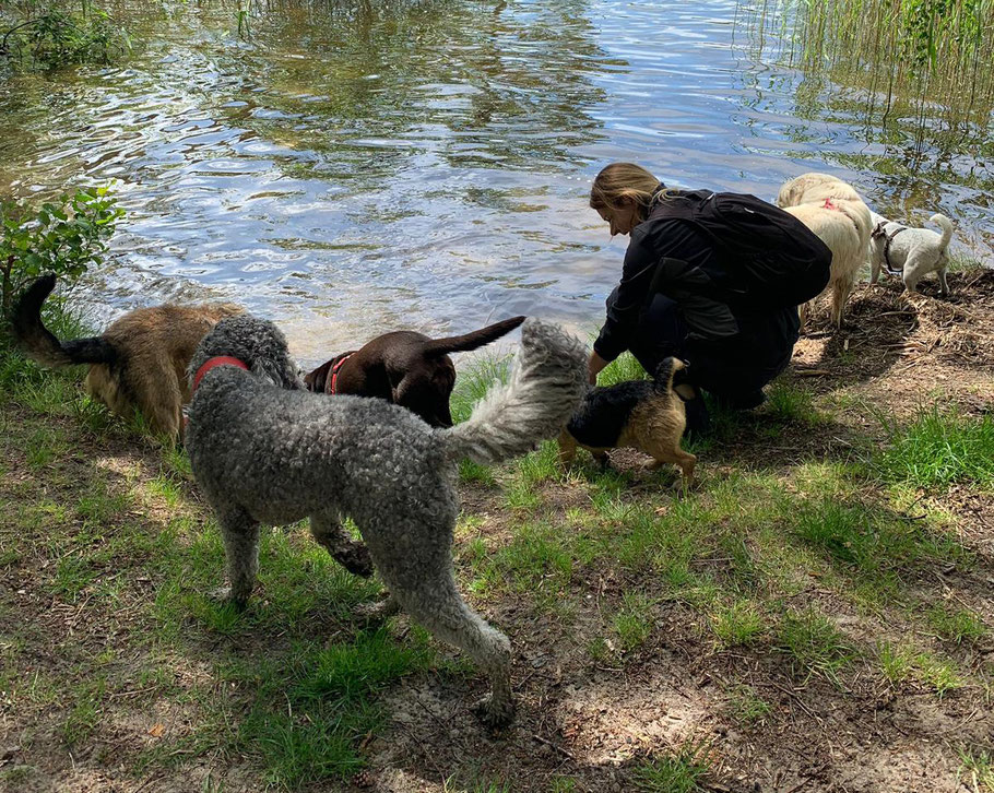 Die teamdogs Berlin Hundetrainerin Stefanie Wehling mit Hunderudel
