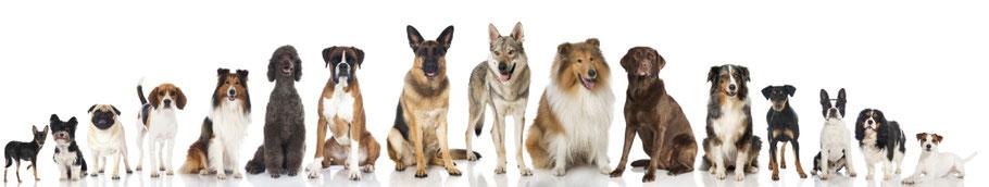 Vermifuger les chiens dès 8 mois et durant toute sa vie