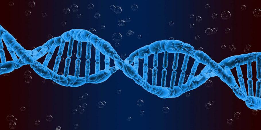 L'acido desossiribonucleico (DNA) è la ricetta che permette all'organismo di svolgere le sue operazioni