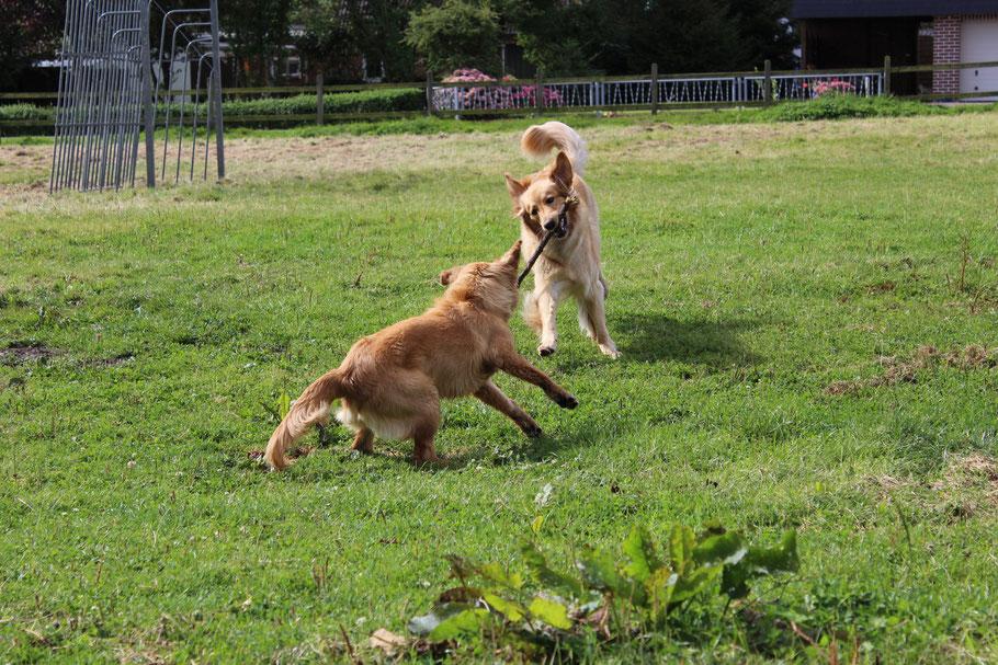 Bellis (rechts) und Tilda (links)