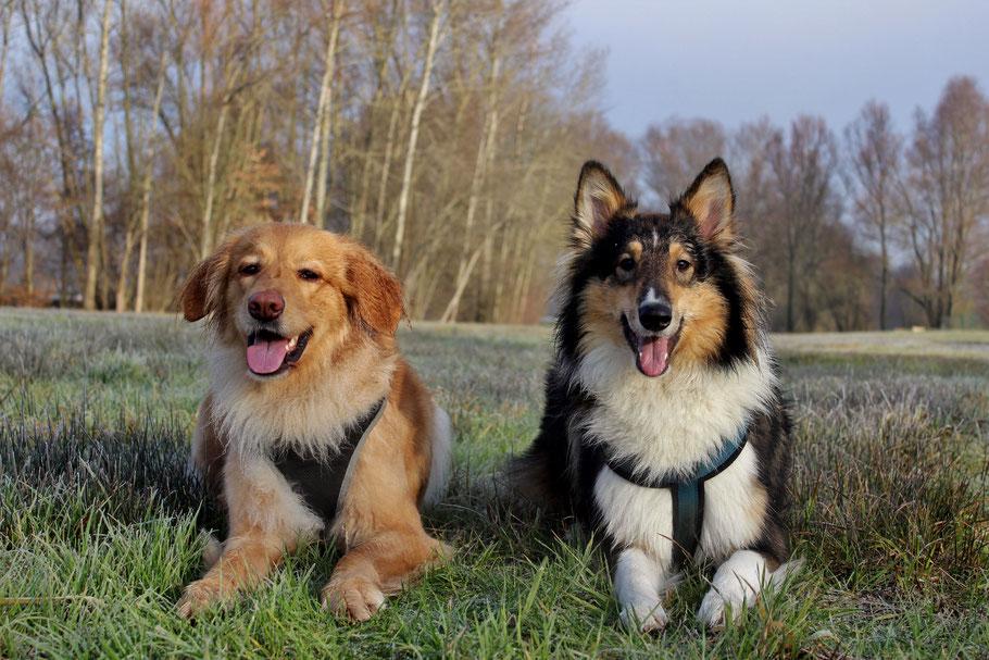 Bellis (links) und Luna (rechts)