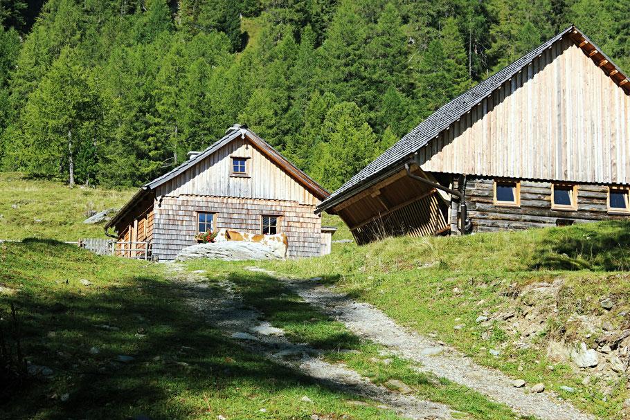 Der Almsommer im Salzburger Land