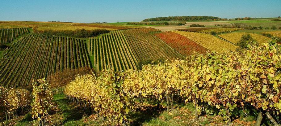 vignes sur des coteaux