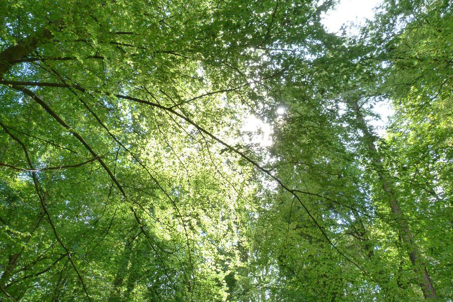 Holz - Ein nachwachsender Rohstoff