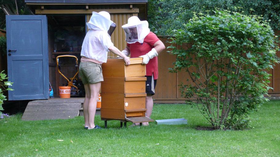 Team, wir, Bienen, Beute