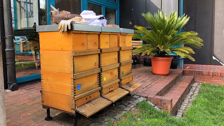 Bienenvölker der Imkerei Fließgold in Berlin Hermsdorf