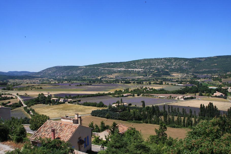 Bild: Lavendelfelder in Sault, Vaucluse, Provence