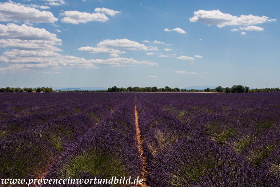 Bild: Lavendeltour hier auf dem Weg nach St.-Jurs