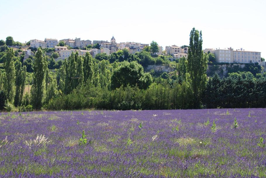 Bild: Blick auf Sault mit Lavendelfeld
