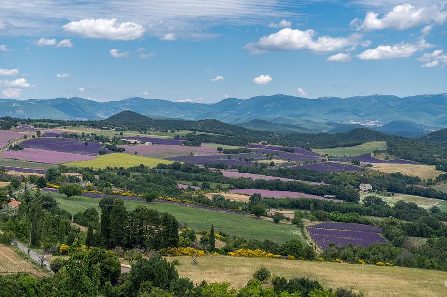 Bild: Lavendel- und Thymianfelder bei Vachéres, Provence