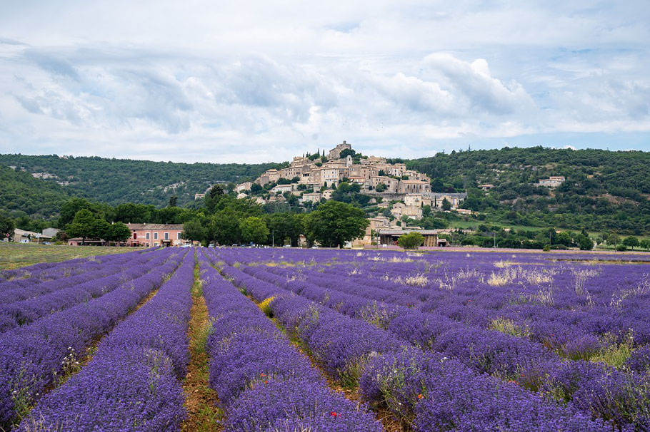 Bild: Lavendelfeld bei Simiane-la-Rotonde