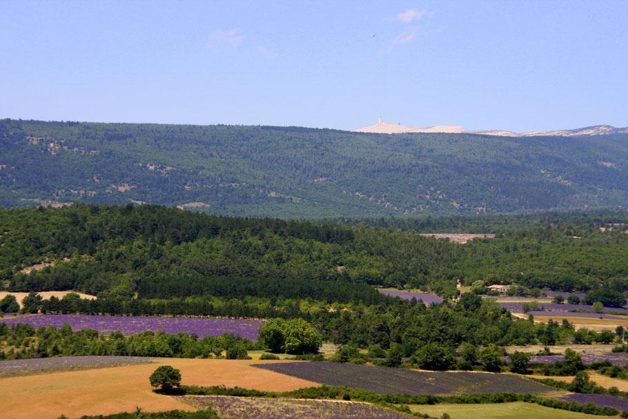 Bild: Lavendelfelder mit Blick auf den mont Ventoux